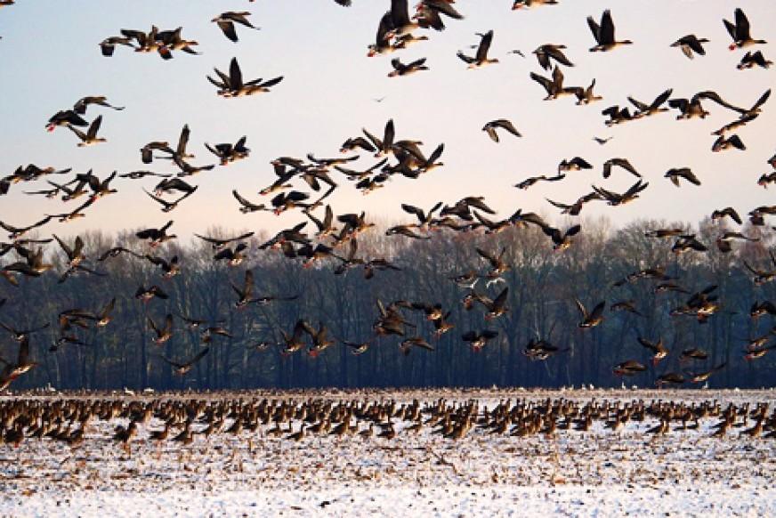aves-migratorias.jpg